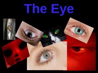 eye ppt HISTOLOGYmucous membranes & tear.ppt